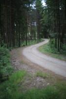 väg-skog