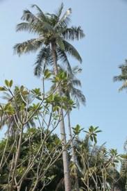 palmer-malaysia
