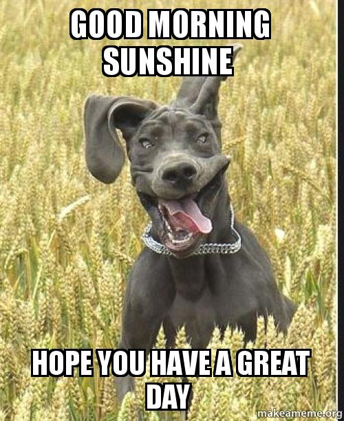 Good Morning Sunshine Hope You Have A Great Day | Make a Meme