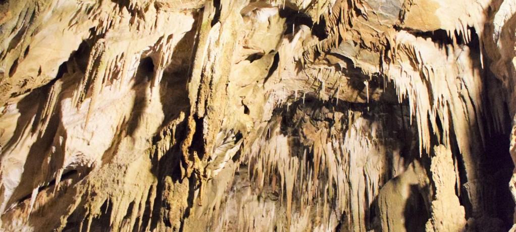 Skelett & köttätande sniglar i Ngarua Caves!