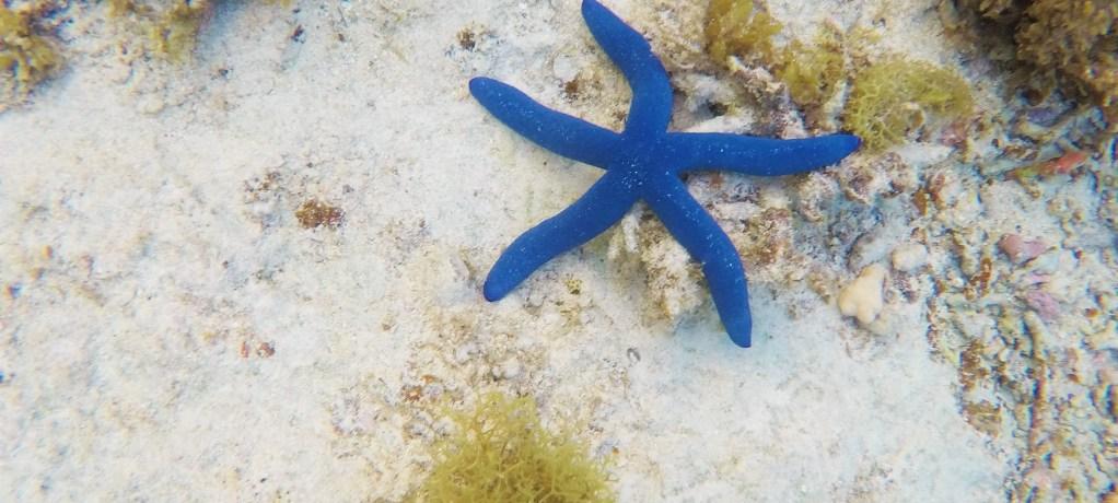 En inblick i Tongas undervattensvärld