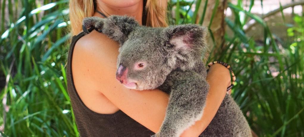 Lurviga kramar på Koala Sanctuary