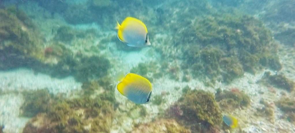 Överraskande djurliv under Byron Bays yta!