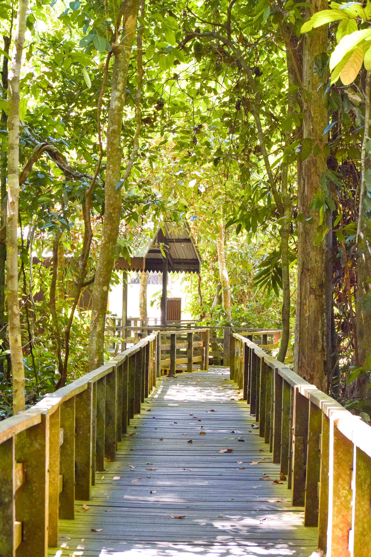 en träspång med trästaket i djungeln.
