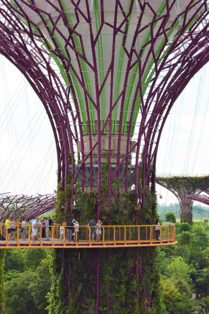 supertrees ocbc skywalk singapore