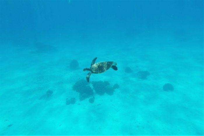 sköldpadda utanför panglao