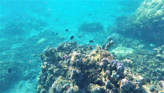 korallrev i salomonöarna