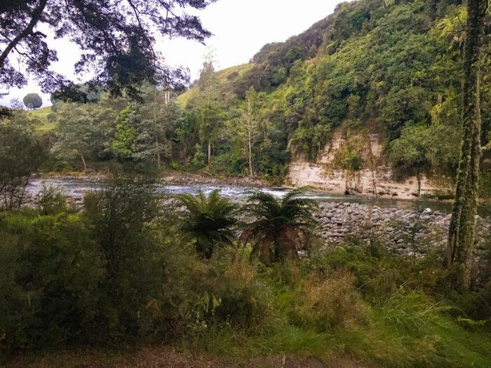 flod och träd vid naturcampingen ruatiti.