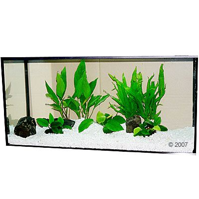 Plantes d'aquarium Zooplants