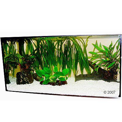 Plantes d´aquarium Zooplants ´´Lanceur de disque´´ - 13 plantes