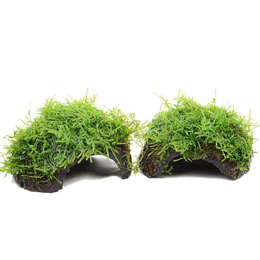 Plantes pour aquarium Zooplants