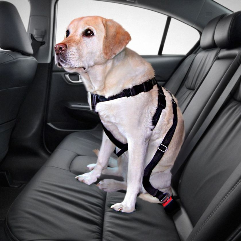 Ceinture de sécurité Taille S pour chien tour de poitrail 30-60cm Trixie - Ceinture sécurité Chien