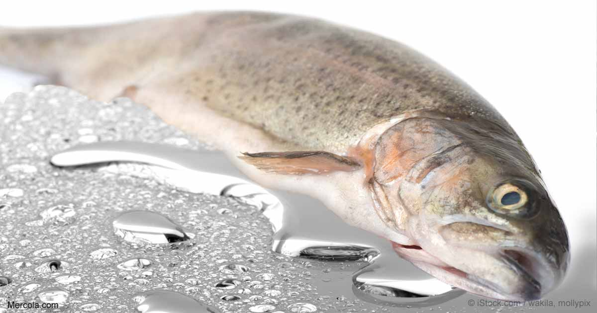Mercury in australia s derwent river turns healthy food for Mercury in fish