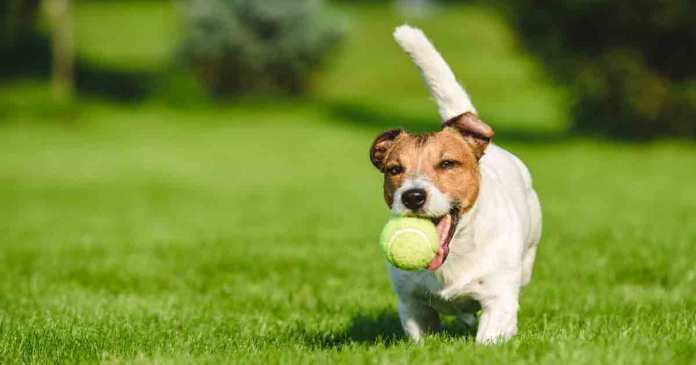 dogs and tennis balls Cheap Toys & Kids Toys