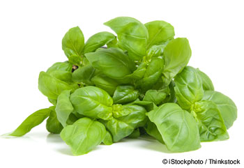 Basil Nutrition Facts
