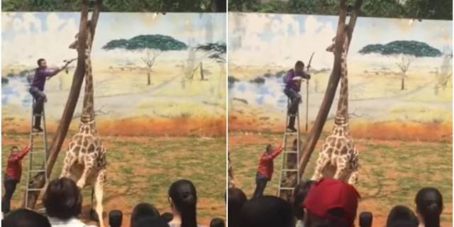 La terrible muerte de una jirafa luego de que su cabeza quedara atrapada entre dos ramas en un zoológico de China
