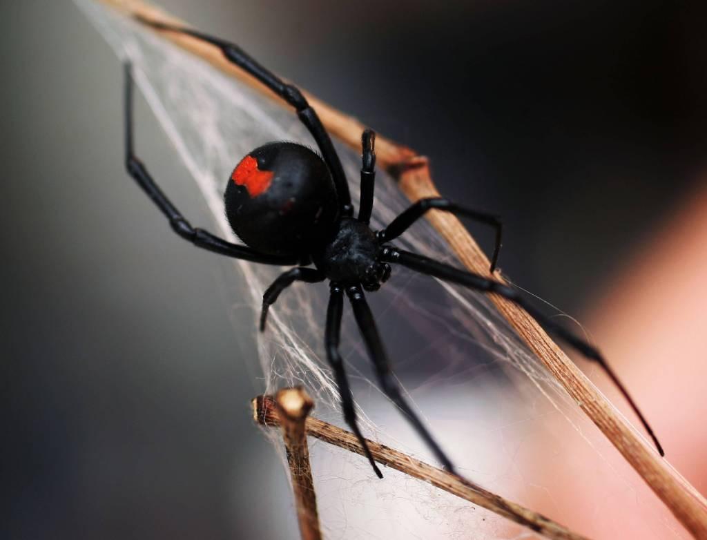 Hombre incendió su casa por tratar de quemar arañas con un soplete