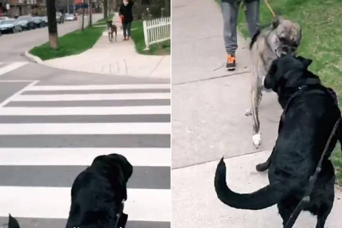 Vídeo que mostra reencontro de cachorros separados na quarentena encanta as redes sociais