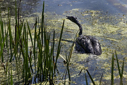 Image result for oil spill in river