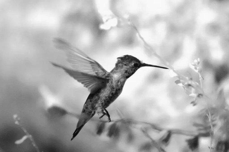 Photo of hummingbird that is representative of Twitter.
