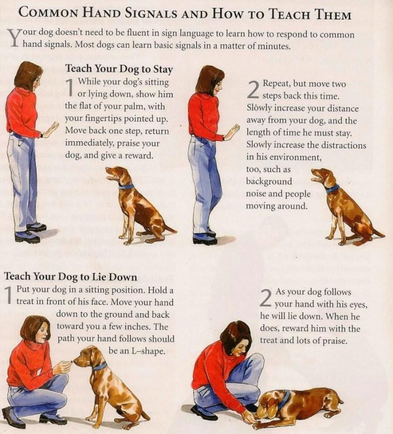 How Can I Teach My Dog Simple Commands?