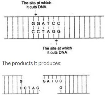 ncert class 12 biology chapter 11 biotechnology