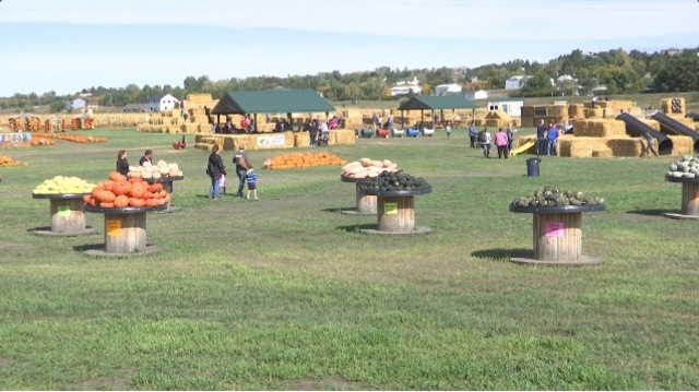 Opening weekend in the Pumpkin Patch