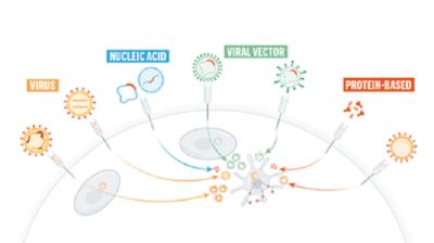 coronavirus vaccines get a biotech boost