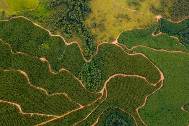 Aerial view of eucalyptus plantation in Brazil