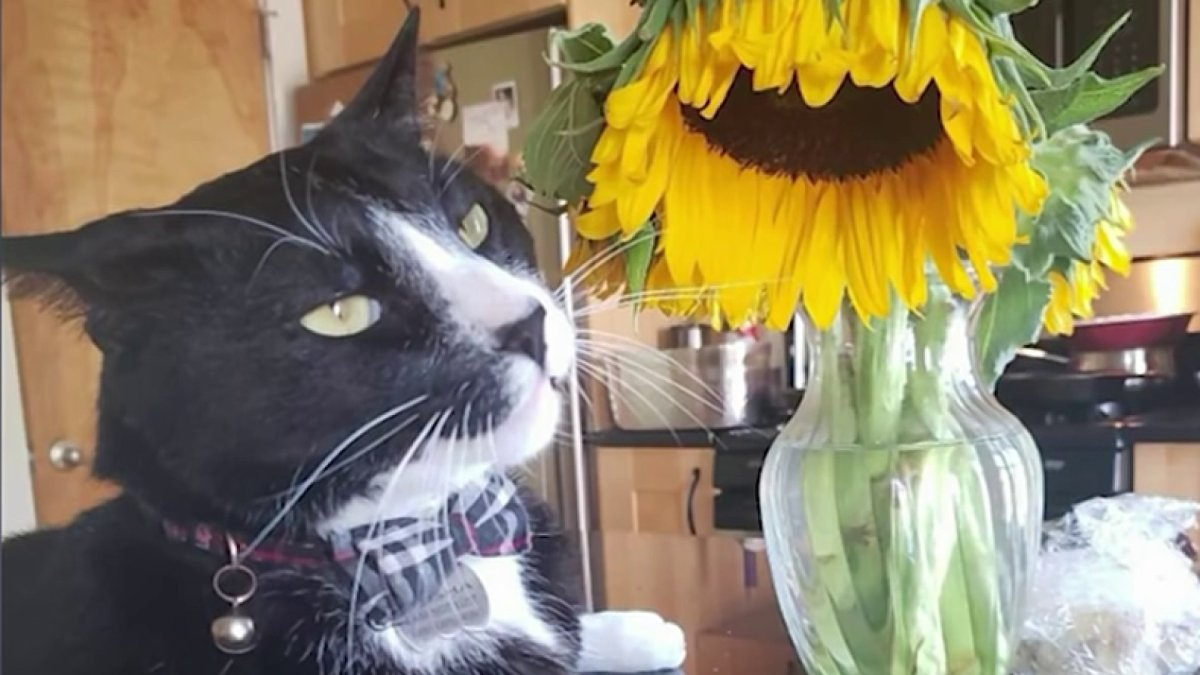 Torture and Killing of Cat in Cambridge Sparks Animal Cruelty Investigation