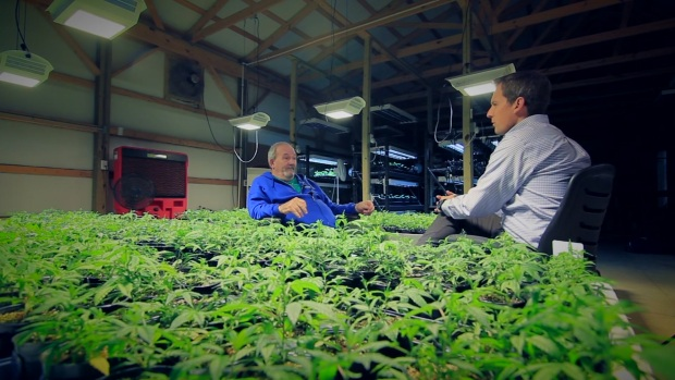 Hemp Farming is a 'Green Gold Rush'