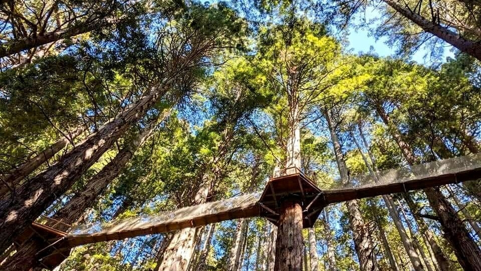 Trees Of Mystery Opens The Redwood Canopy Trail – Nbc Los Angeles   Spiral Staircase Around Tree Trunk   Treehouse Masters   Ter Kulve   Canopystair   Robert Mcintyre   Wooden Stairs