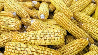 Food-Labeling Prop. 37 Fails