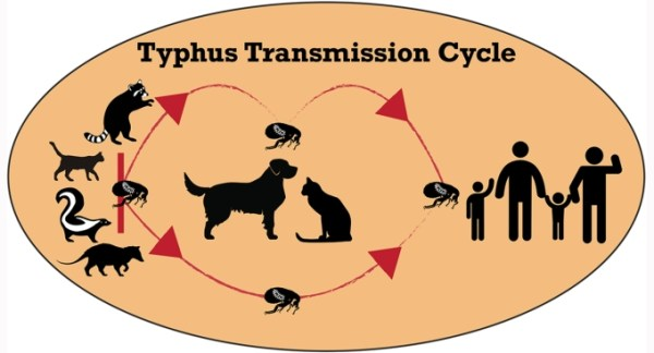 Image result for california typhus outbreak 2019