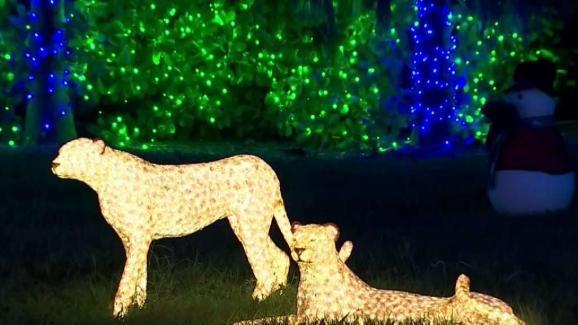 christmas lights miami # 64