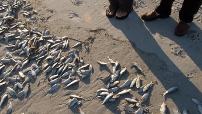 High Numbers of Dead Fish Wash Up in Central Florida