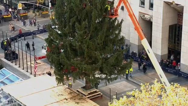 See a 72-Foot Tree Get Hoisted Up on Rockefeller Plaza