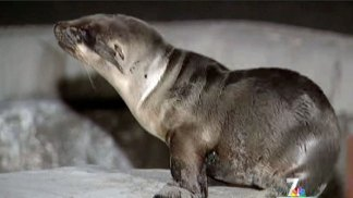 Increase Number of Sea Lion Pup Rescues