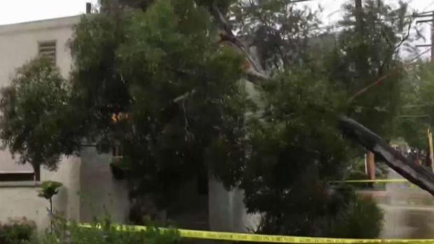 Arbre tombe sur la maison de Coronado alors que des rafales frappent le comté