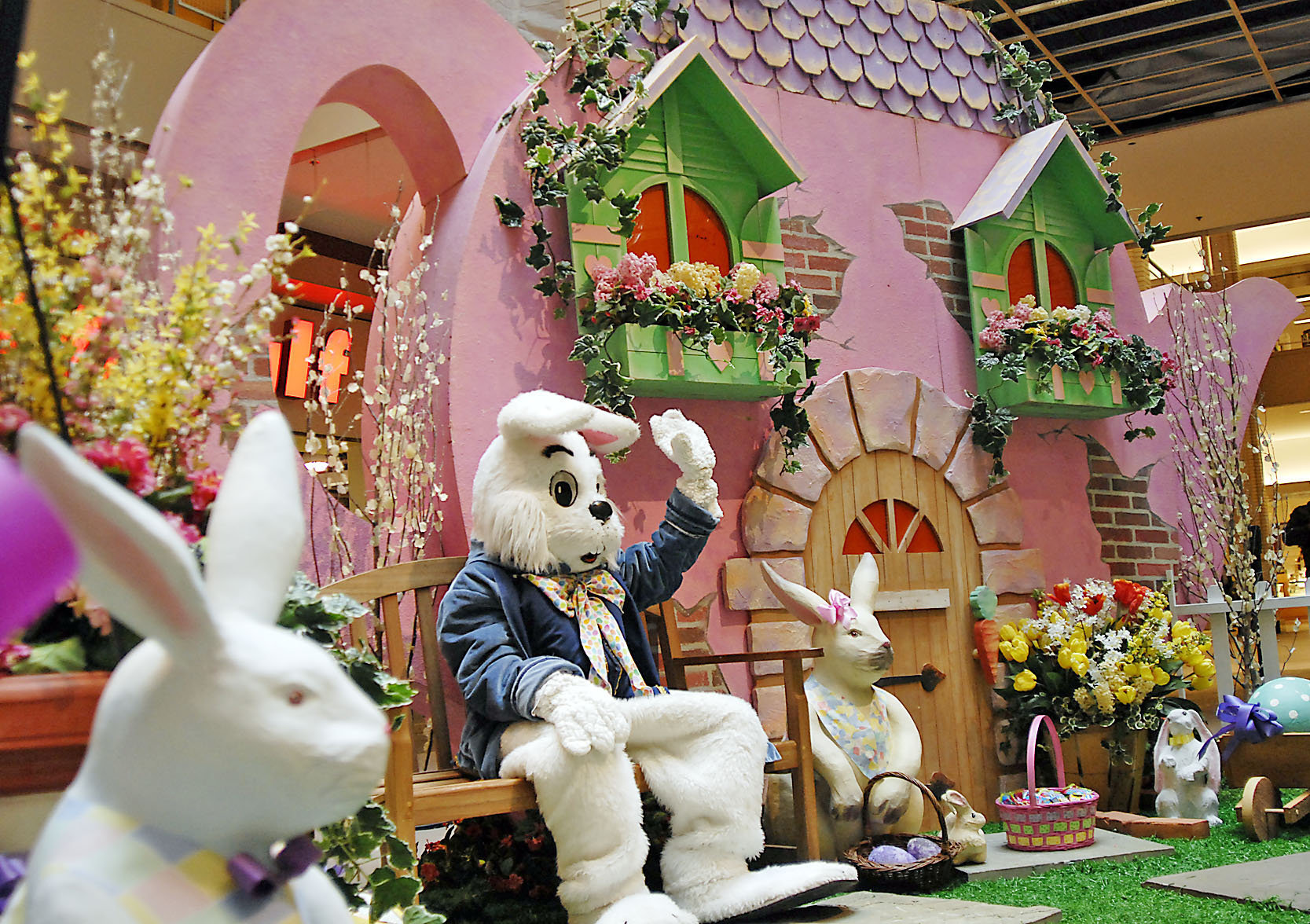 Image result for easter bunny pictures