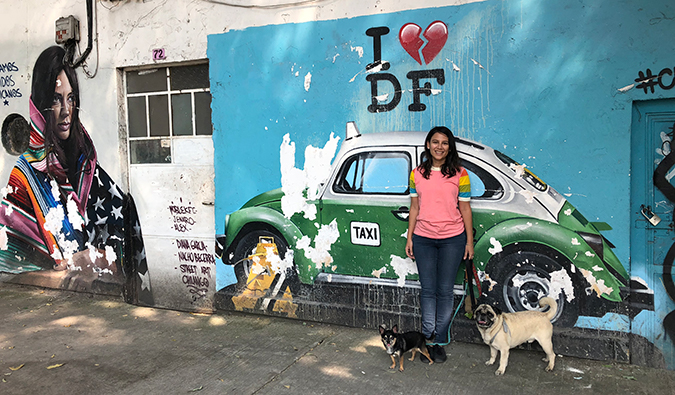 Boogie the pug and Marcelo the chi in Mexico City