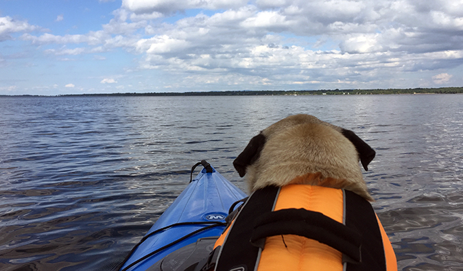 Boogie the pug kayaking in Vermont