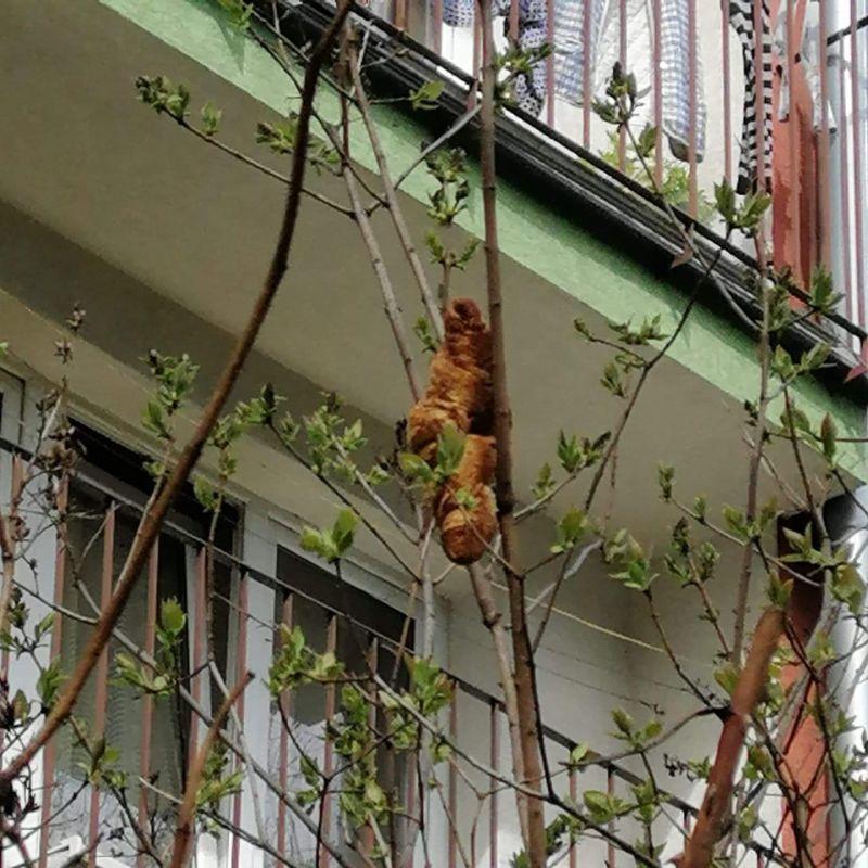 ▲一名妇女作了报告,并指出她已经看到一个无头的棕色生物被困在树上两天了。  (图像/反向KTOZ