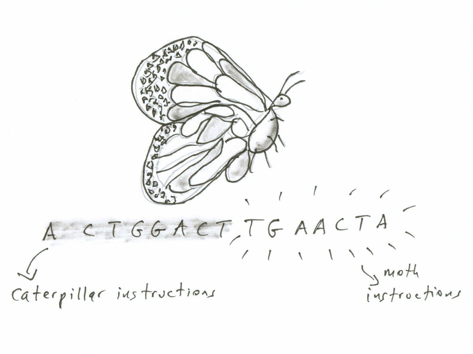 Metaphor in the death of the moth