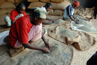 Workers separate beans in the coffee warehouse in Yirgacheffe, Ethiopia. Coffee originated in Ethiopia, but now grows in more then 50 countries around the world.