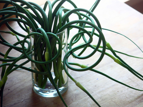 garlic scapes, green garlic, scape recipes