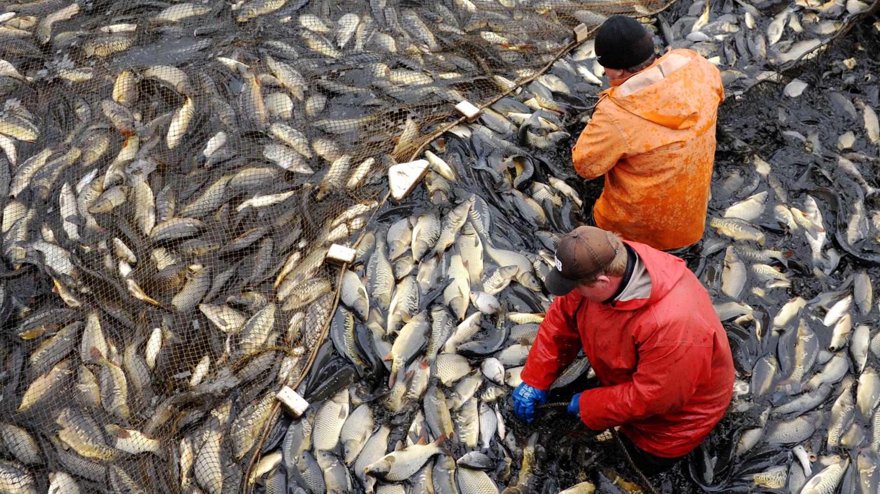 Fresh Fish Sales Near Me