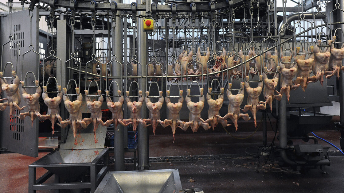 A poultry processing plant in France. Europe banned treating chicken carcasses with chlorine in the 1990s out of fear that it could cause cancer.