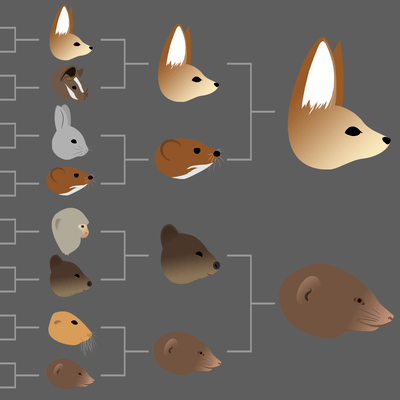 Could A Quokka Beat A Numbat? Oddsmakers Say Yes