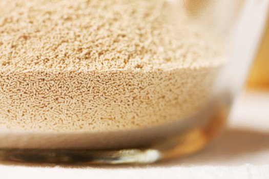 This fungus among us — baker's yeast, aka Saccharomyces cerevisiae — is useful for more than just making bread.
